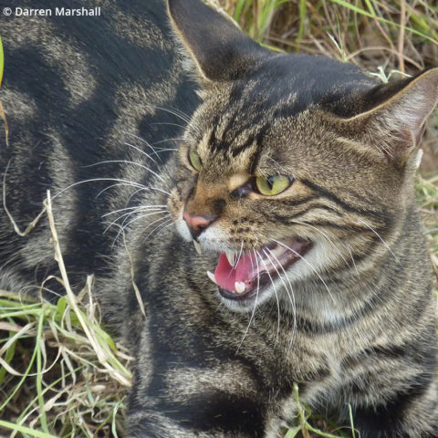 National registration of a feral cat bait