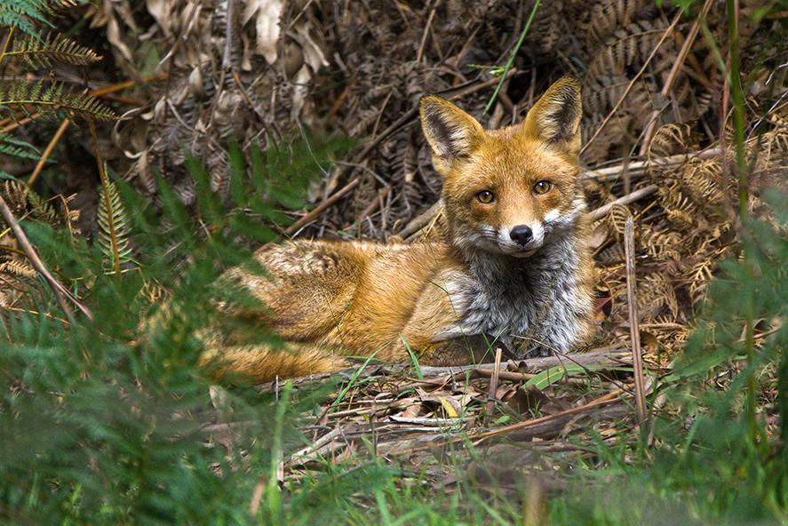 Fox_Eastham-David